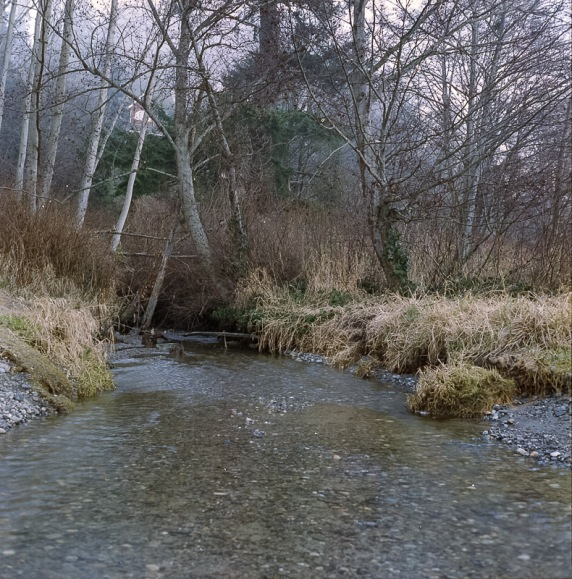 Yashica Mat-124G film image stream through the forest
